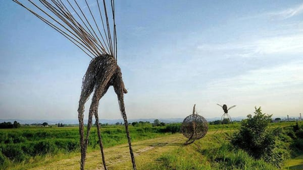 Floralia: a Cotignola un workshop per la land art dell'Arena delle balle di paglia
