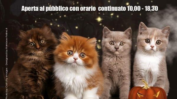 Il regno dei gatti: torna a Ravenna la mostra felina internazionale