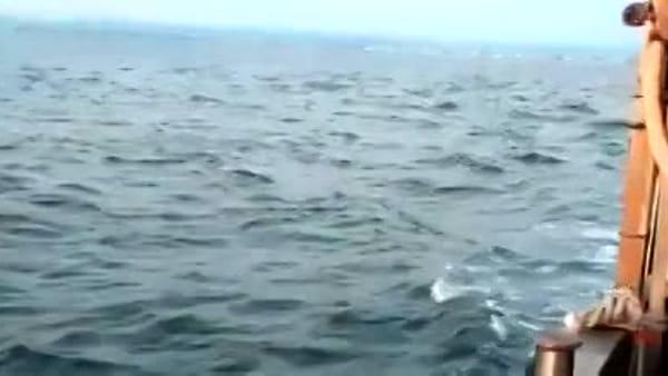 Spettacolo in mare aperto: i pescatori di cozze incontrano i delfini - VIDEO
