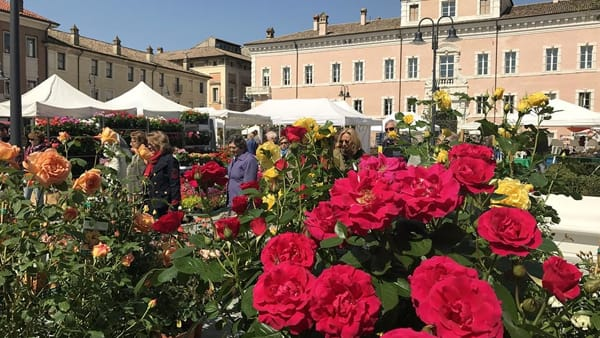 """A """"Ravenna in fiore"""" spuntano le piante di canapa per scopi terapeutici"""