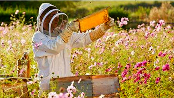 """""""Le api, sentinelle del nostro ambiente"""" con La Grama"""