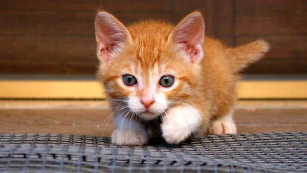 Pizzata di beneficenza per gli amici gatti