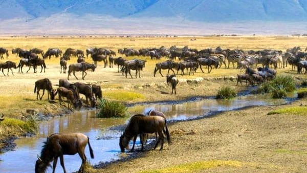 """Avventura in """"Tanzania"""", tra savana, foreste e villaggi remoti"""