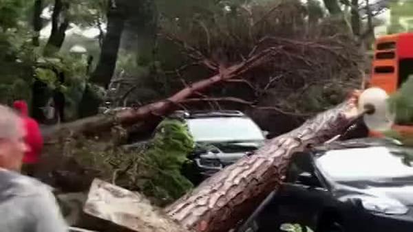 Gli alberi sradicati si abbattono su auto e bus: caos a Milano Marittima - VIDEO