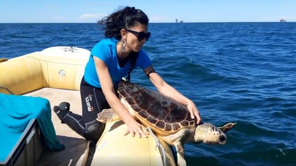 Dopo un anno la tartaruga Dumbo torna a nuotare in mare - VIDEO