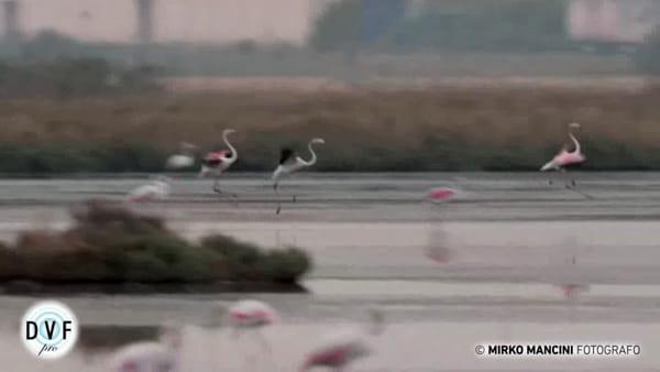 Le meraviglie della fauna ravennate in un video girato in mezzo alla natura