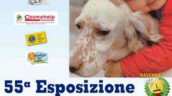 Esposizione internazionale canina al Pala De Andrè