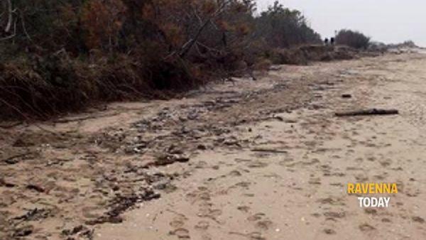 L'erosione della spiaggia davanti alla Pineta Ramazzotti: il video