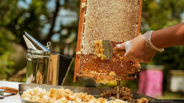 Una serata dedicata alle api con degustazione di miele