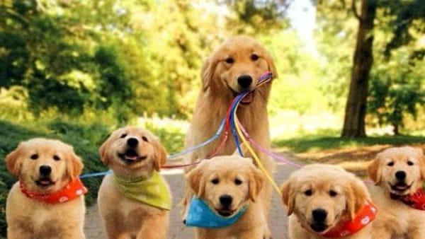 Sfilata canina e amici a quattro zampe da adottare