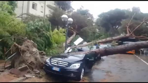 Gli alberi crollano sulle auto: il video ripreso in diretta da alcuni residenti