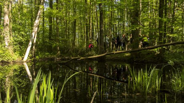 Picnic, escursioni e musica nel bosco con il festival Cabù