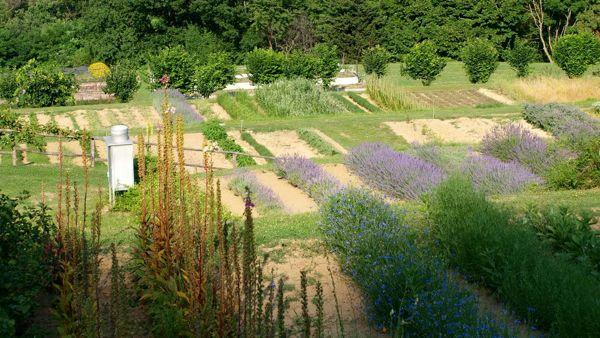 Erbe in Fioreal Giardino delle erbe di Casola Valsenio