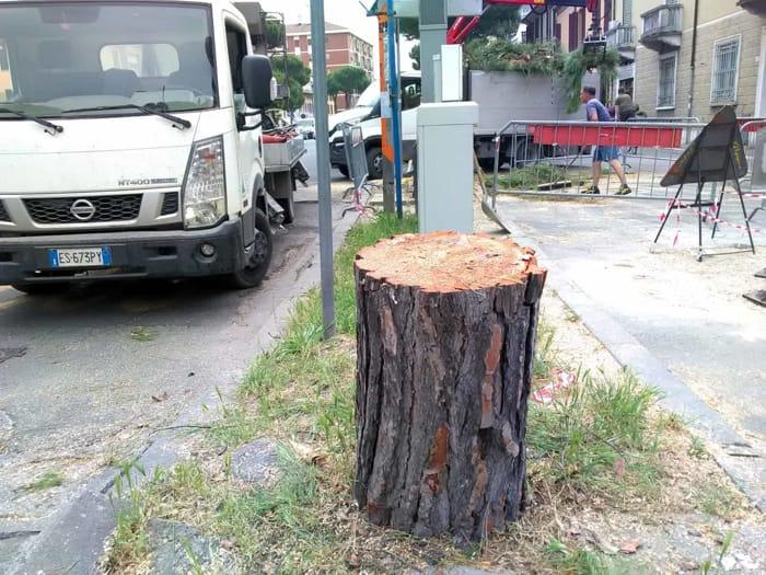 Abbattuti i pini di via Maggiore (foto Massimo Argnani)